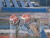 """""""Jeux sans frontières"""" 1988 aux Saisies (France)"""
