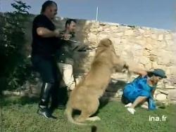 """8 août 1997 : un lion attaque Marie-Ange Nardi à """"40°"""""""